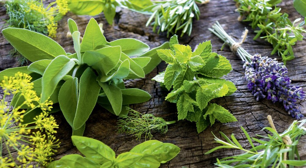 Common Medicinal Herbs